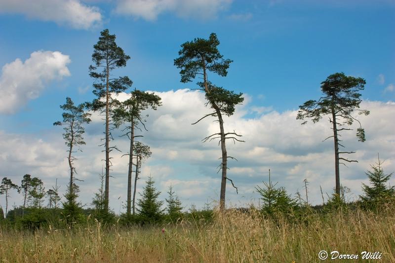 Ballade dans les Hautes fagnes et les sous-bois le 10-08-2011 Img_2748-800x600--2bbd9b1