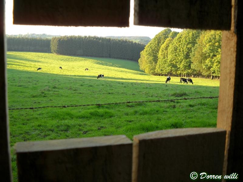 promenade sur les fagnes et alentours ( jalhay ) le 16-oct-2011 Dpp_jalhay---16-o...1---0030-2dd7030