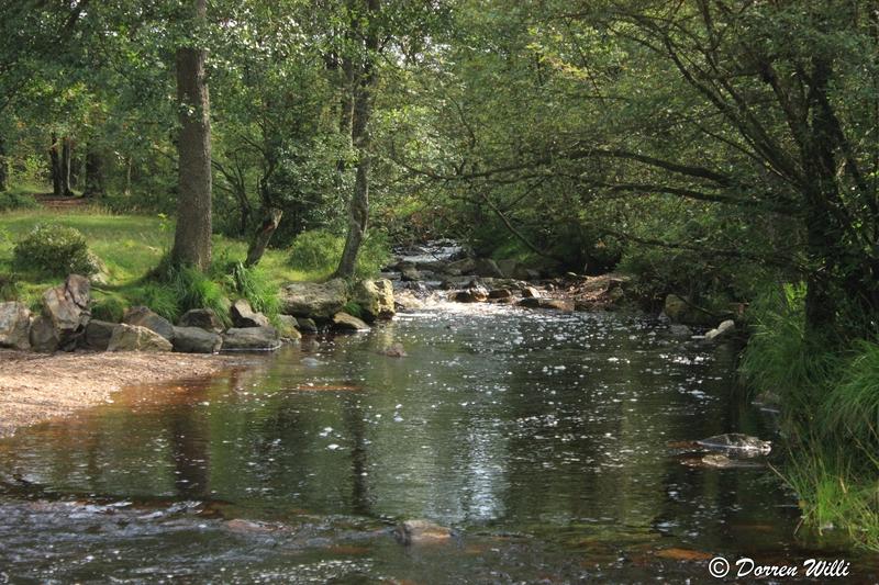 Ballade dans les Hautes fagnes et les sous-bois le 10-08-2011 Img_2613-800x600--2bbd5cf