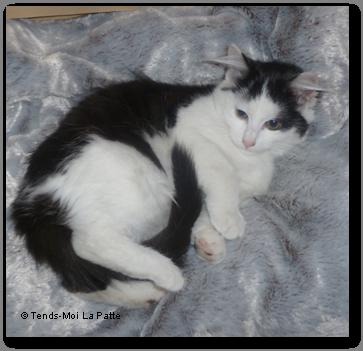 NALA rebaptisée TAGADA femelle noire et blanche de 4 mois Nala---co-01-2c6d471