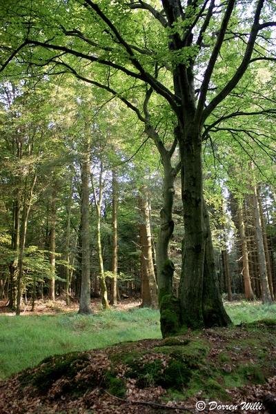Ballade dans les Hautes fagnes et les sous-bois le 10-08-2011 Img_3093-800x600--2bbe916