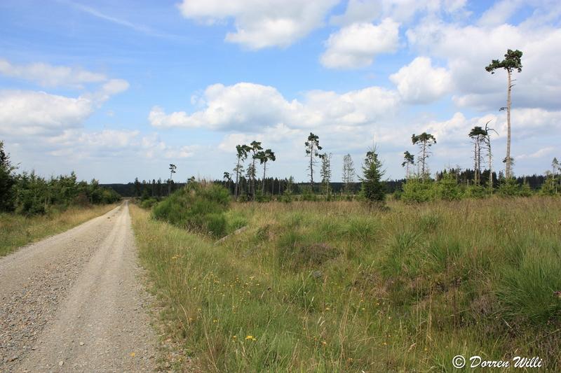 Ballade dans les Hautes fagnes et les sous-bois le 10-08-2011 Img_2758-800x600--2bbd9f2