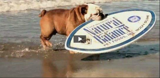 Vidéos commiques E-et-cie-un-chien-glisseur01-30f9bdc
