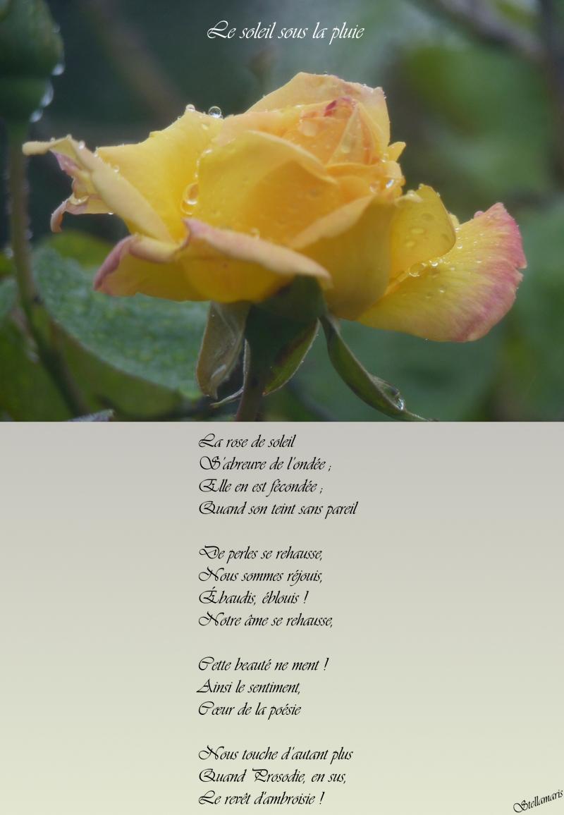 Le soleil sous la pluie / / La rose de soleil / S'abreuve de l'ondée ; / Elle en est fécondée ; / Quand son teint sans pareil / / De perles se rehausse, / Nous sommes réjouis, / Ébaudis, éblouis ! / Notre âme se rehausse, / / Cette beauté ne ment ! / Ainsi le sentiment, / Cœur de la poésie / / Nous touche d'autant plus / Quand Prosodie, en sus, / Le revêt d'ambroisie ! / / Stellamaris